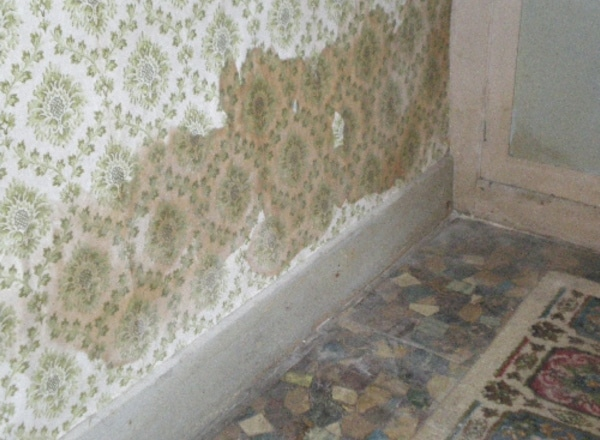 Bone Dry Damp Proofing Real Expertise For Sorting Out